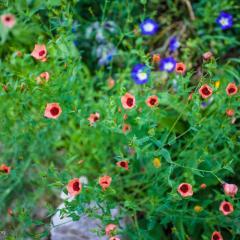 GIVERNY-莫奈花园
