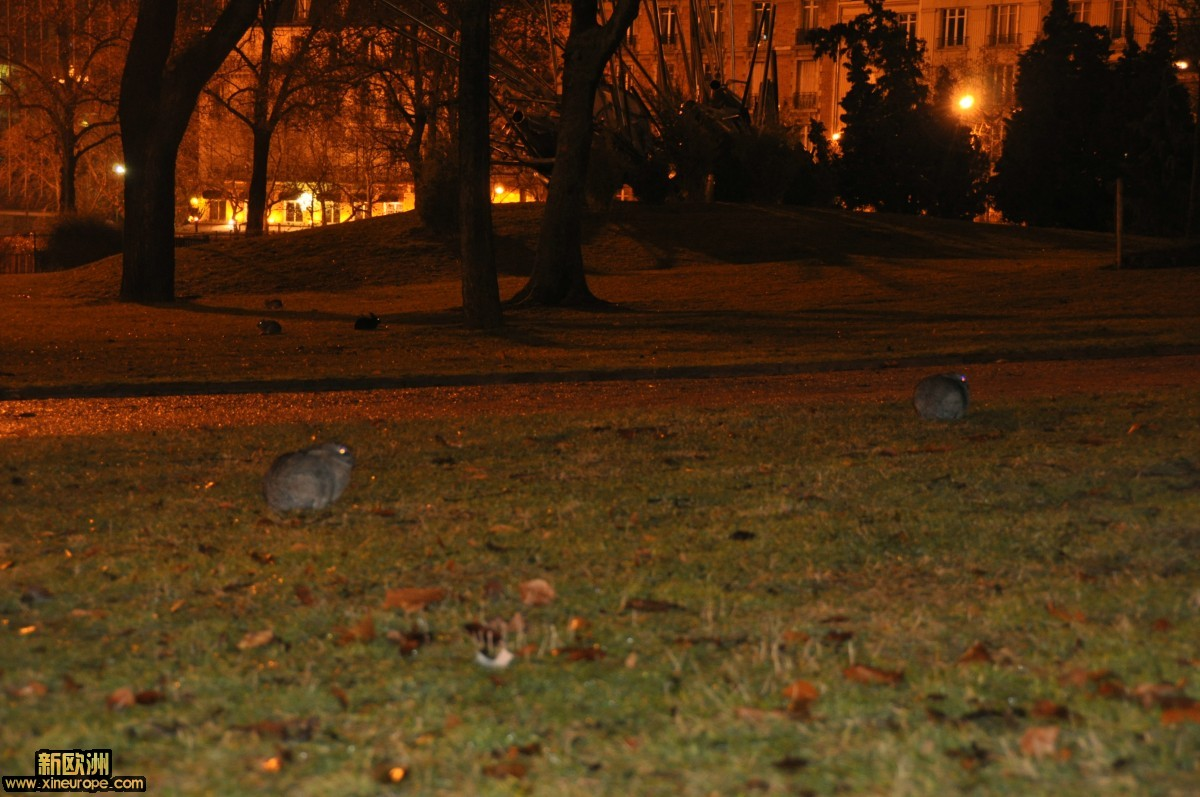 公园凌晨的兔子.JPG