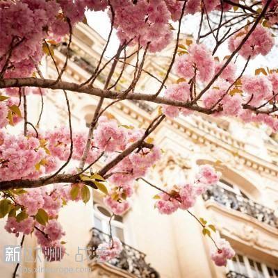 Cerisiers-a-Paris-Eole-Wind-400x400.jpg