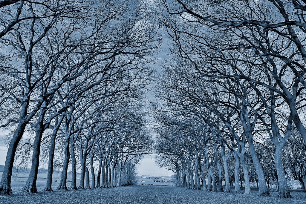 巴黎郊区的森林