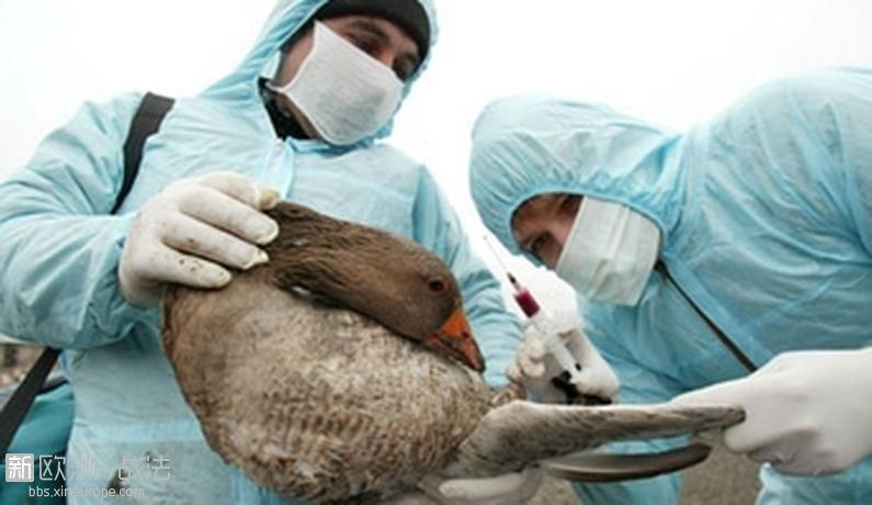 120309_Les-volatiles-peuvent-transporter-le-virus-de-la-grippe-aviaire.jpg