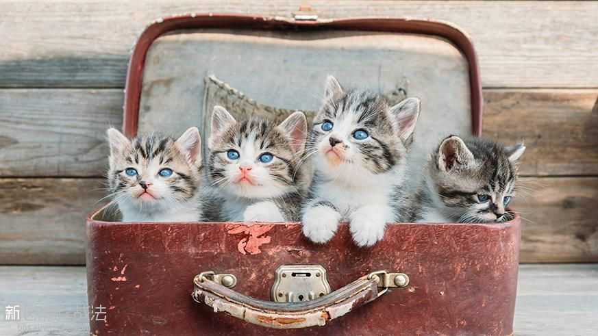 cats-in-suitcase.jpg