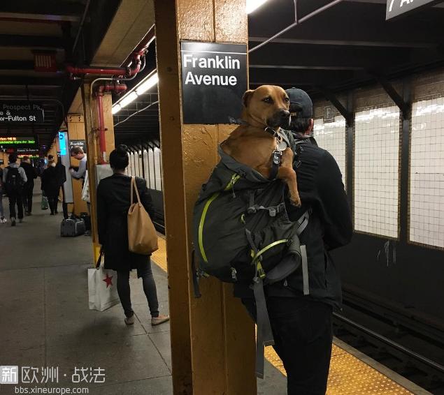 el-metro-de-nueva-york-prohibe-la-entrada-a-los-perros-a-no-ser-que-vayan-en-una.png