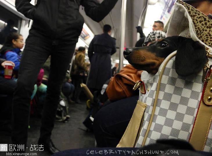 dog-on-new-york-subway.jpg