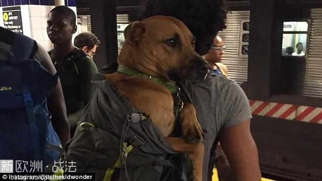 3A1DDFE400000578-3910768-On_your_back_Some_dogs_are_carried_around_by_their_owne.jpg