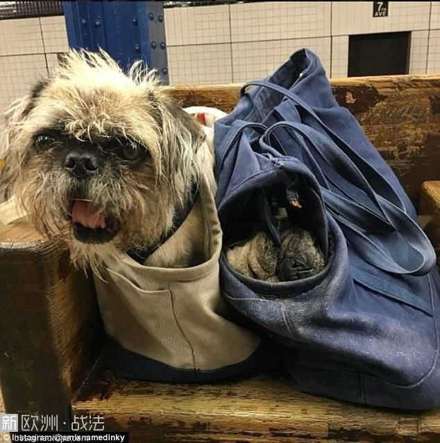 3A1DE04000000578-3910768-Two_dogs_two_bags_Riders_can_take_as_many_dogs_as_they_.jpg