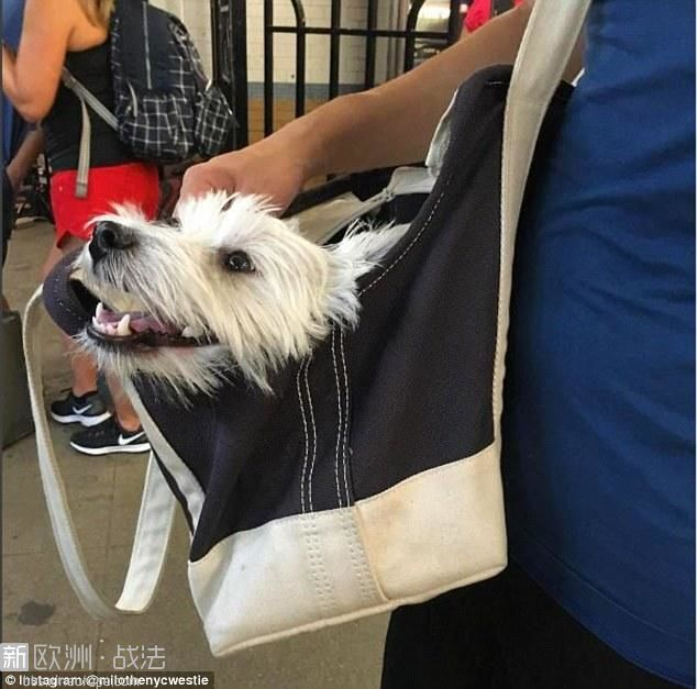 3A1DDFF400000578-3910768-Happy_bag_happy_dog_This_dog_appears_to_be_smiling_as_i.jpg