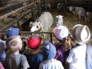 accueil-visite-des-moutons-300x225.jpg