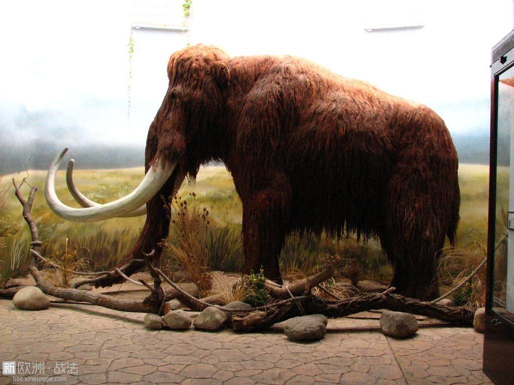 1200px-Mammoth-ZOO.Dvur.Kralove.jpg