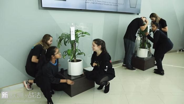 What-happens-when-you-bully-an-IKEA-plant-5af02cb4613c5__700.jpg