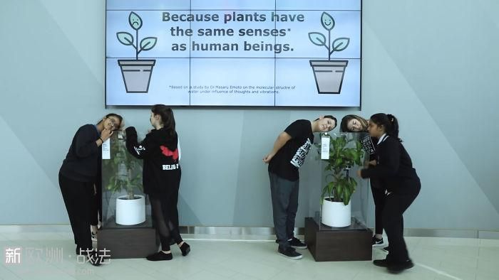 What-happens-when-you-bully-an-IKEA-plant-5af02cb66119b__700.jpg