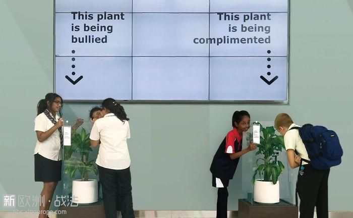 What-happens-when-you-bully-an-IKEA-plant-5af0380a2e570__700.jpg