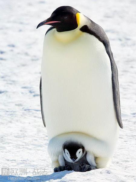 企鹅.jpg
