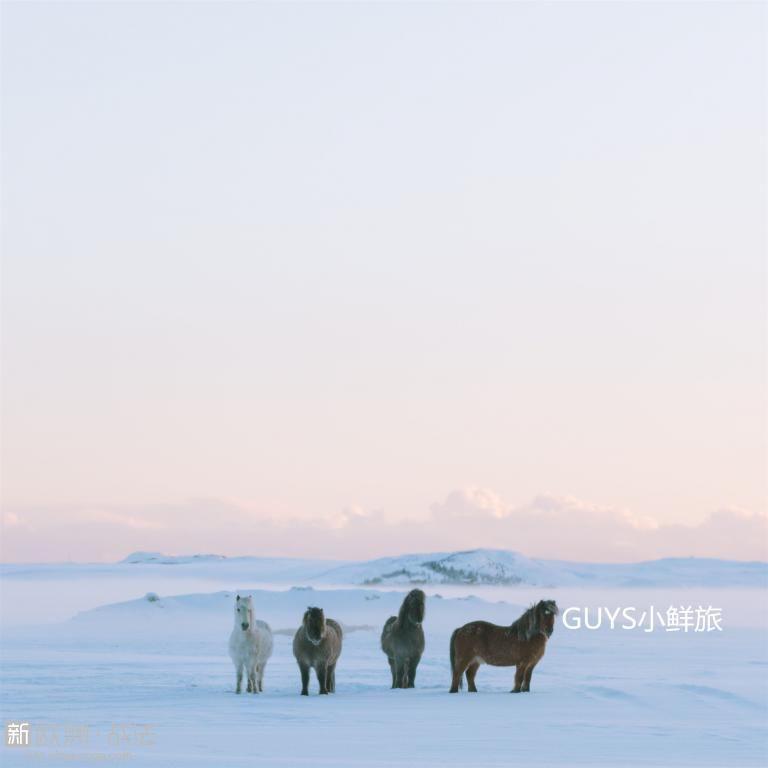 冰岛 马 冬2_副本.jpg