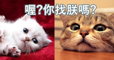 CAT-COVER.jpg