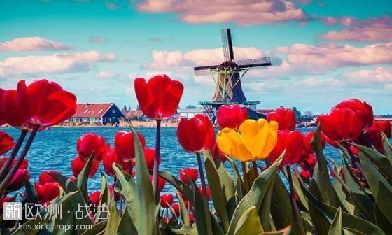 荷兰赏花1.jpg