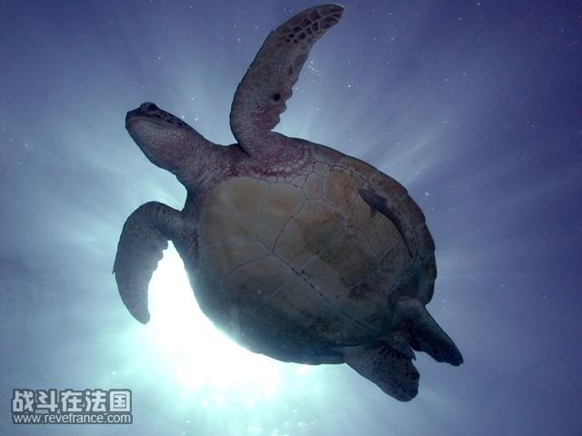 silhouette of turtle.jpg