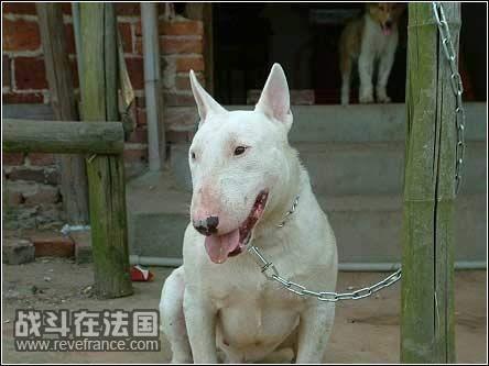 世界上最可爱的狗狗