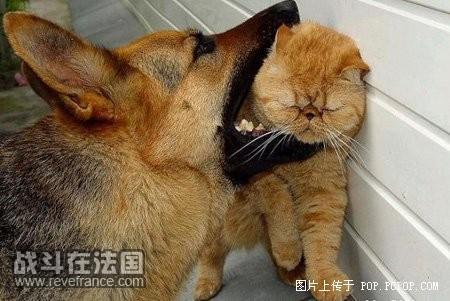 看了心中偷笑的动物照片集
