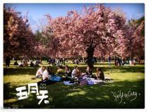 (投票帖)随手拍~秀出你手机里的最美樱花照!