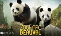【穷游一日】10月8日,穷游菌带路,我们一起去看熊猫宝宝