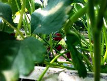 采摘蔬菜瓜果活动圆满结束~大家来看图啦~有图的来添图