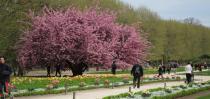 春日必备!巴黎赏樱大地图,屁克腻克约起来!